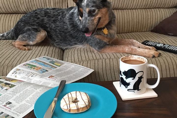 Pet Friendly Mad Dog's Creamery & Donuts