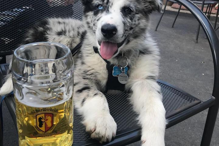 Pet Friendly BierWerks