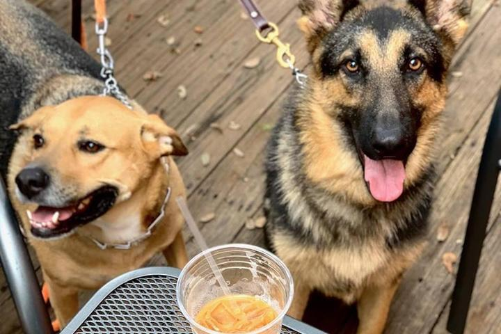 Pet Friendly Twisted Compass Brewing Co.