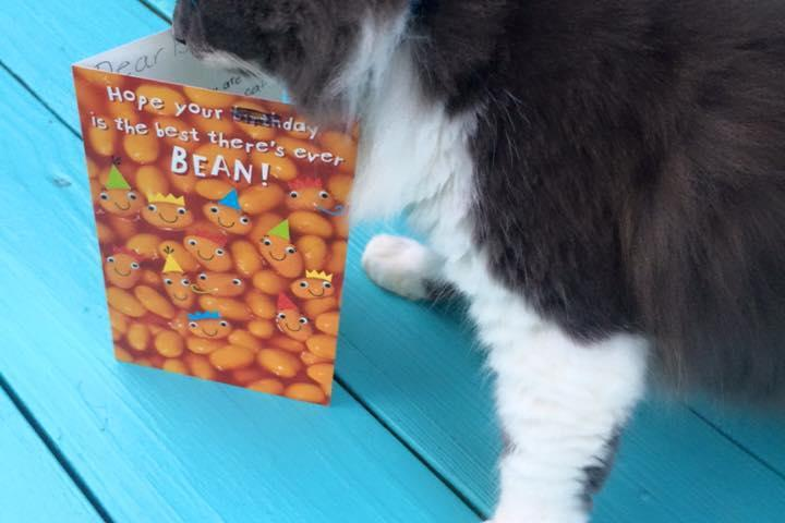 Pet Friendly Tybean Coffee & Art Bar