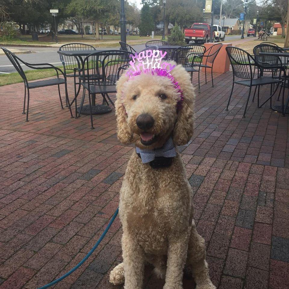 Dog Friendly Stores In Pensacola