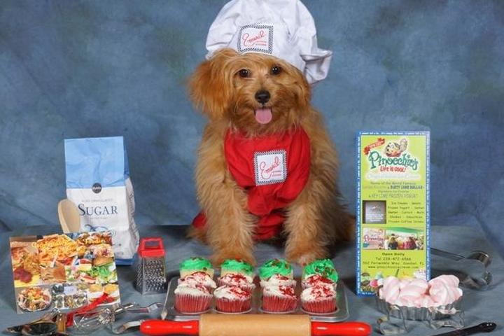 Pet Friendly Geppetto's Beach Foodies