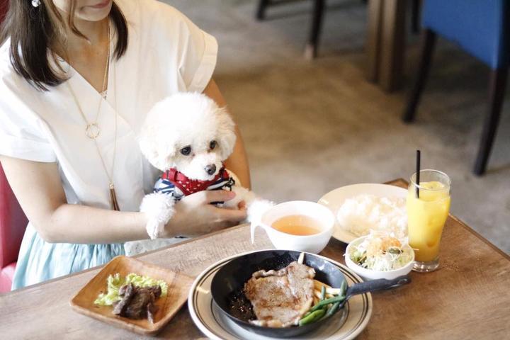 Pet Friendly Ushisuke