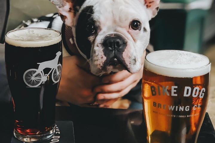 Pet Friendly Bike Dog Brewing Company