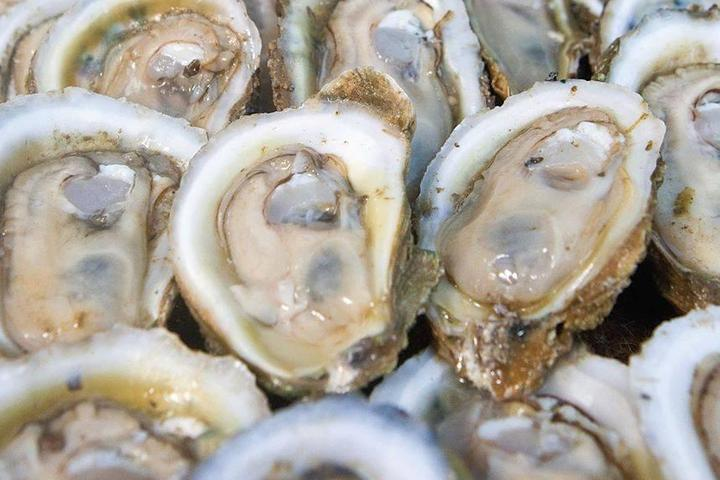 Pet Friendly Dockside Seafood & Raw Bar