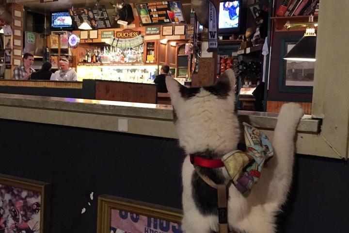 Pet Friendly The Duchess Tavern