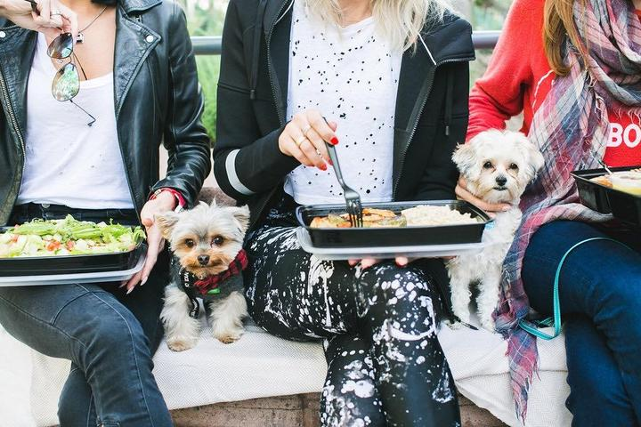 Pet Friendly Panini Kabob Grill