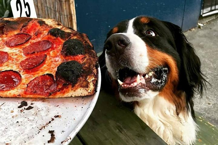 Pet Friendly Pizza Jerk
