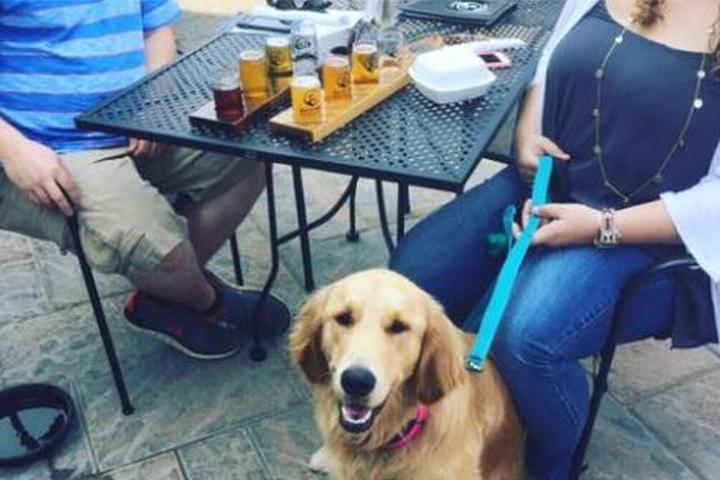 Pet Friendly Backyard Brewery and Kitchen