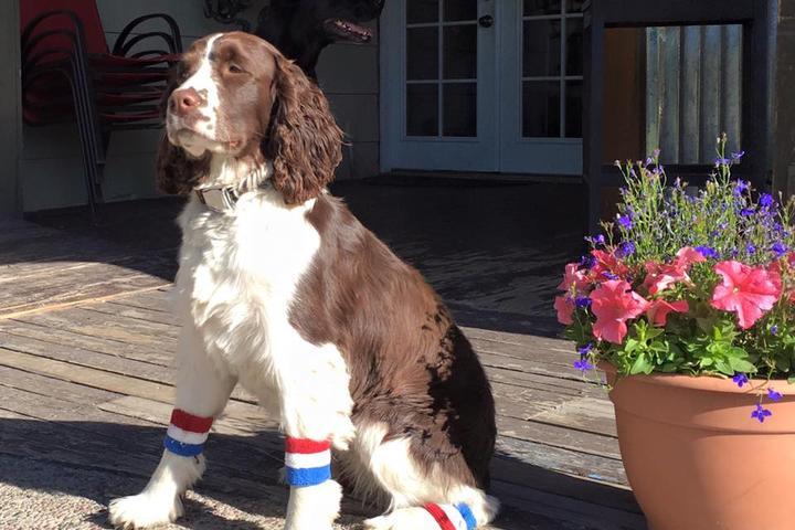 Dog Friendly Restaurants in Montana - Bring Fido