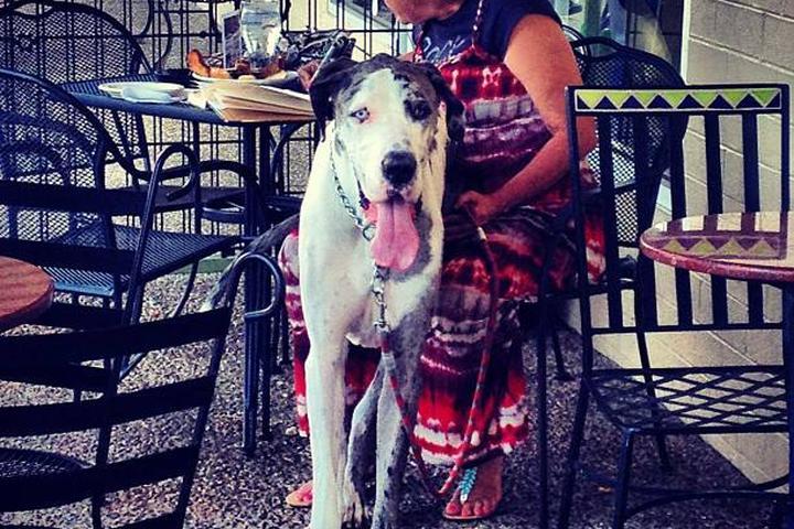 Dog Friendly Restaurants In Fayetteville Ar Bringfido