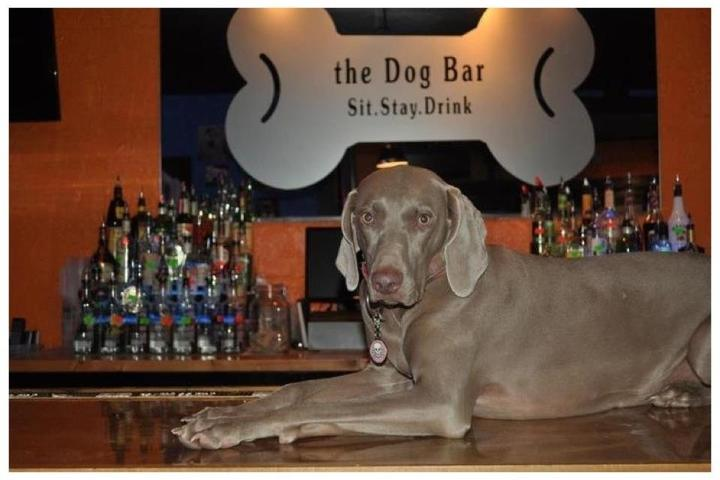 Pet Friendly The Dog Bar