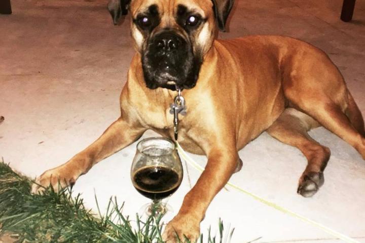 Pet Friendly Caboose Brewing Company