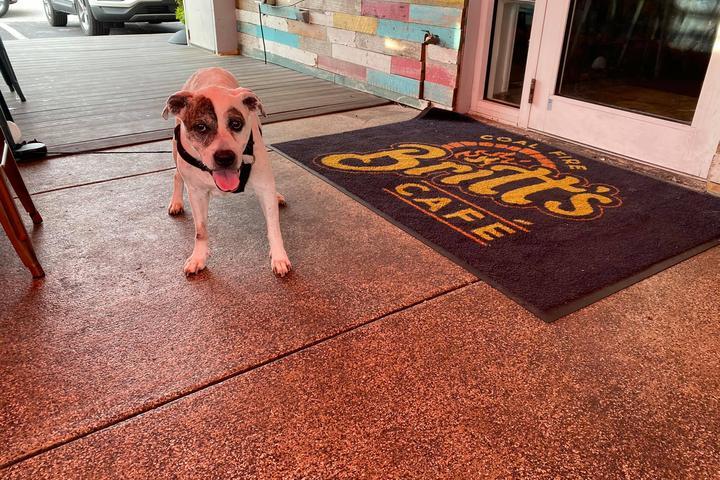 Pet Friendly Britt's Coal Fire Pizza