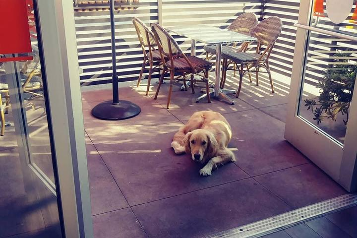 Pet Friendly Promenade Pub