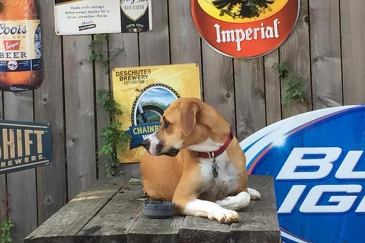 Pet Friendly Tavern on Main