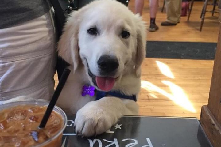Pet Friendly Blocker's Coffeehouse