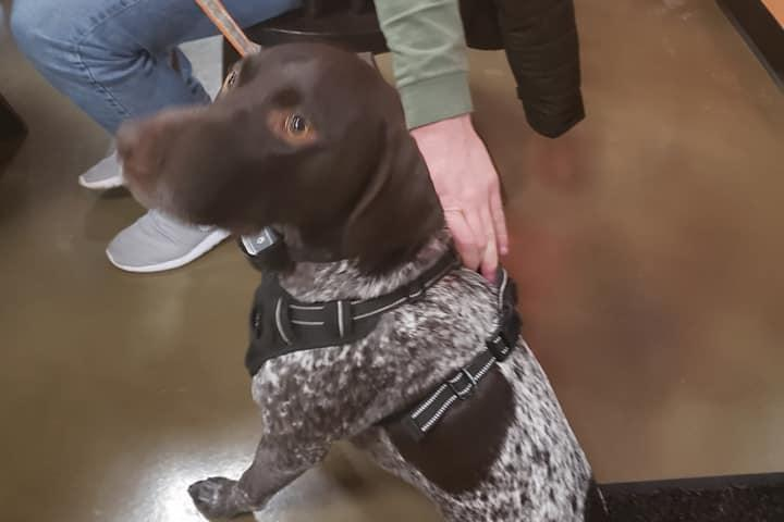 Pet Friendly On The Point Brewing