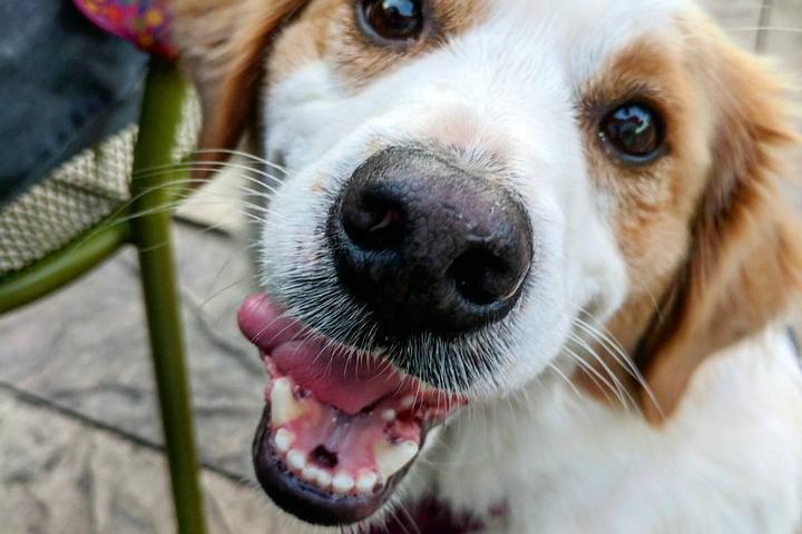 Pet Friendly Dog Watch Mystic