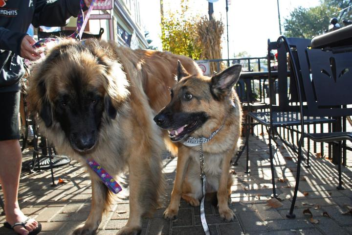 Dog Friendly Restaurants In Loveland Oh Bring Fido
