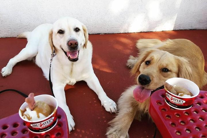 Pet Friendly Bruster's/Nathans