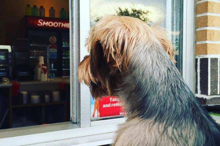 Pet Friendly Smoothie King