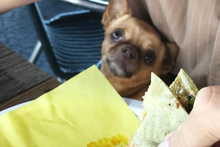 Pet Friendly Taco Mesa