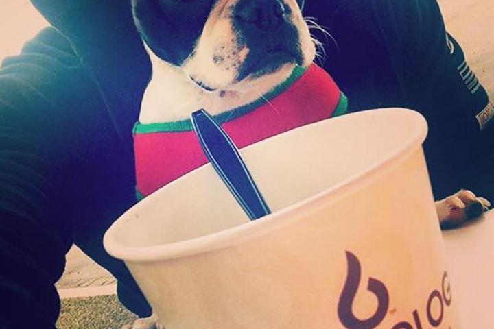 Pet Friendly Yogurtology