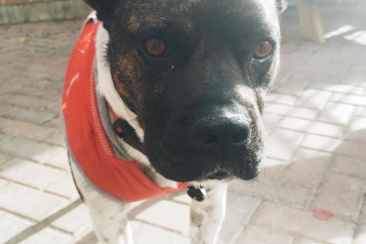 Dog Friendly Restaurants In Libertyville Il Bring Fido