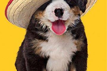 Pet Friendly Cinco de Mayo Mexican Restaurant - Spring Mills