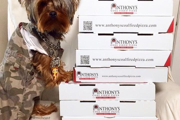 Pet Friendly Anthony's Coal Fired Pizza
