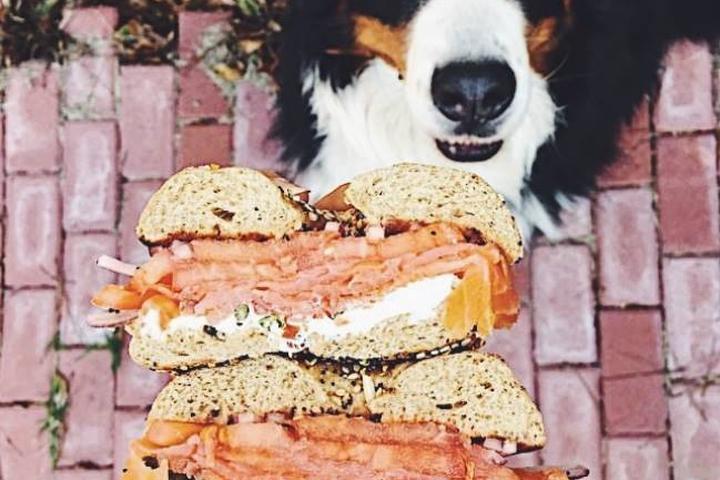 Pet Friendly Bruegger's Bagels