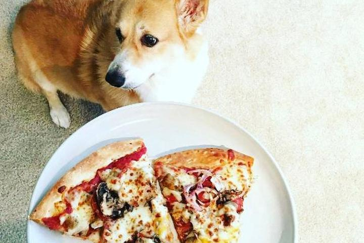 Pet Friendly Extreme Pizza