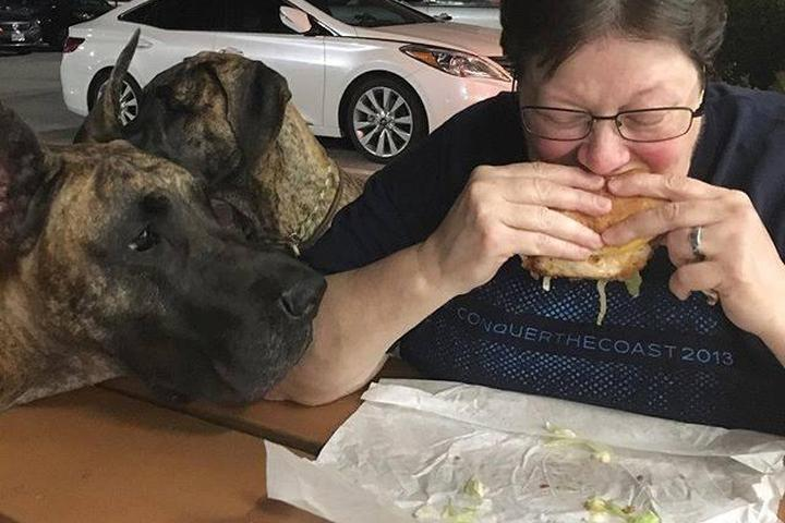 Pet Friendly Mighty Fine Burgers