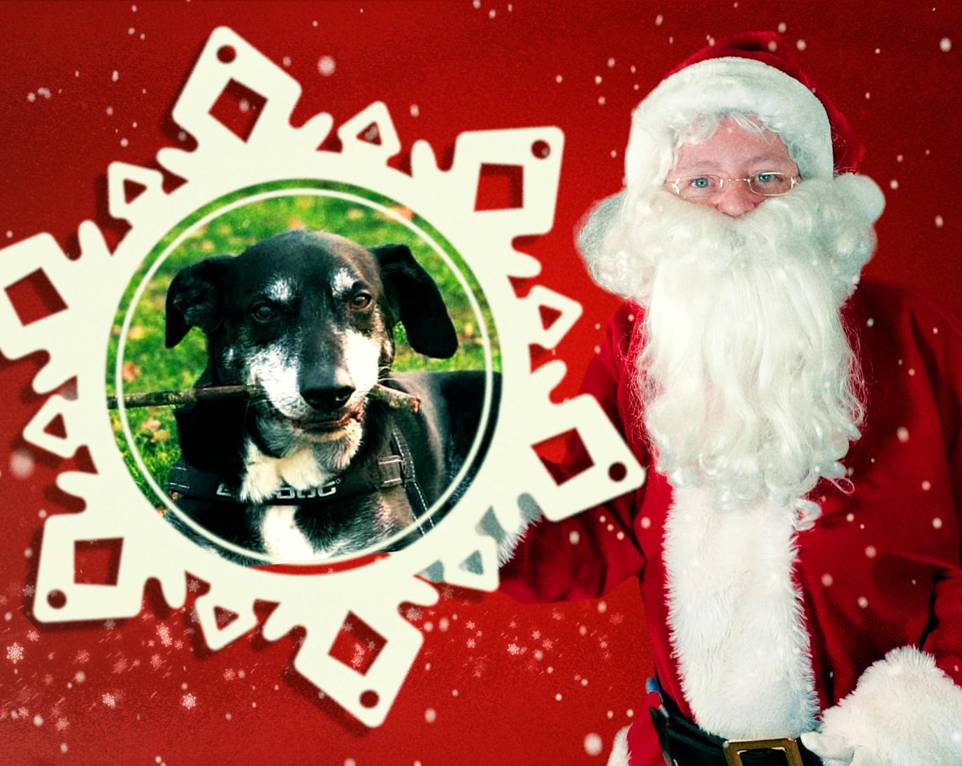 Dog photo with Santa Claus.