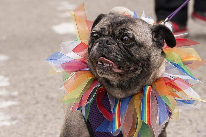 Pet Friendly PennCannaFest Fall Marketplace