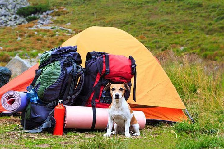 Pet Friendly Harbor Hill Camping Area