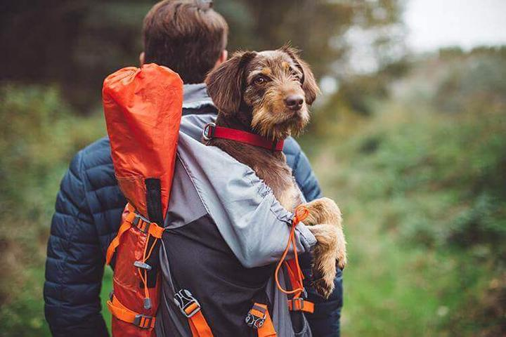 Pet Friendly Oconaluftee River Trail